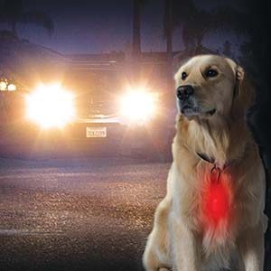Clip-On Light For Pets Camping TrucksResource